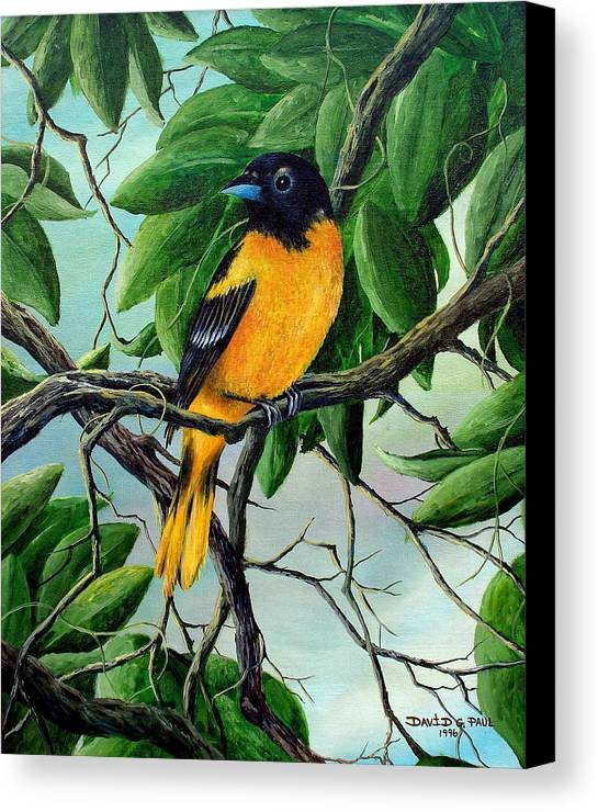Oriole Canvas Print featuring the painting Northern Oriole by David G Paul