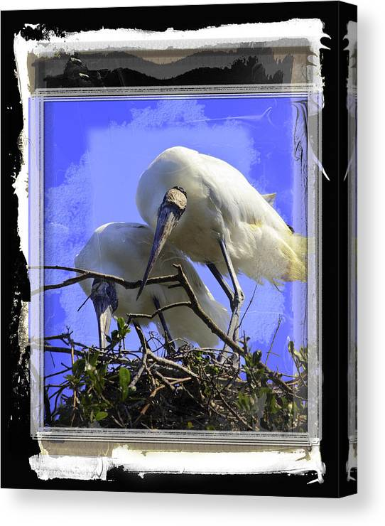 Birds Canvas Print featuring the photograph Wood Storks by Joseph Harper