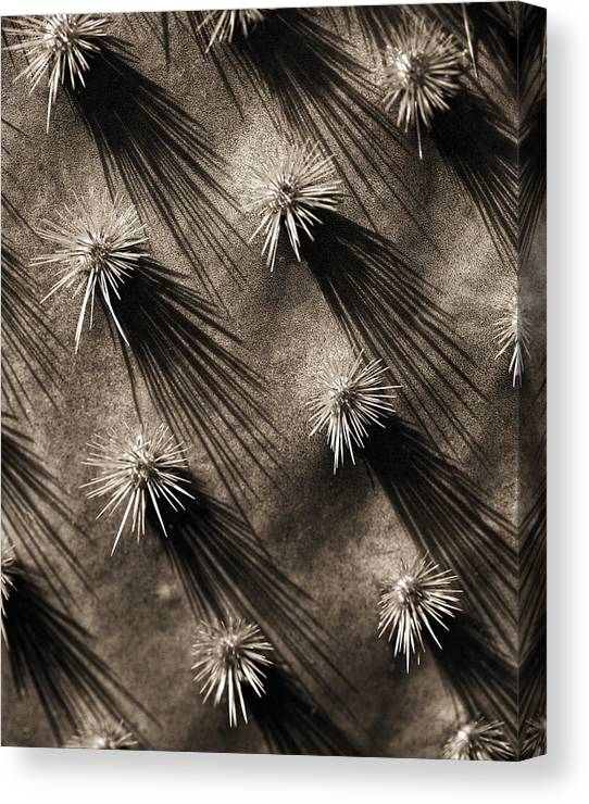 Cactus Canvas Print featuring the photograph Cactus Shadows by Bob Coates