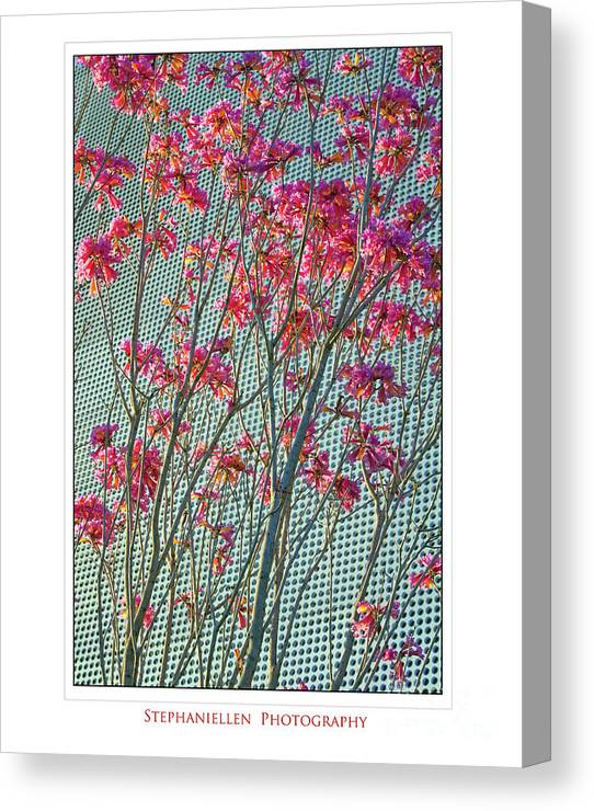 Cherry Blossoms Canvas Print featuring the photograph Cherry Blossoms by Stephanie Hayes