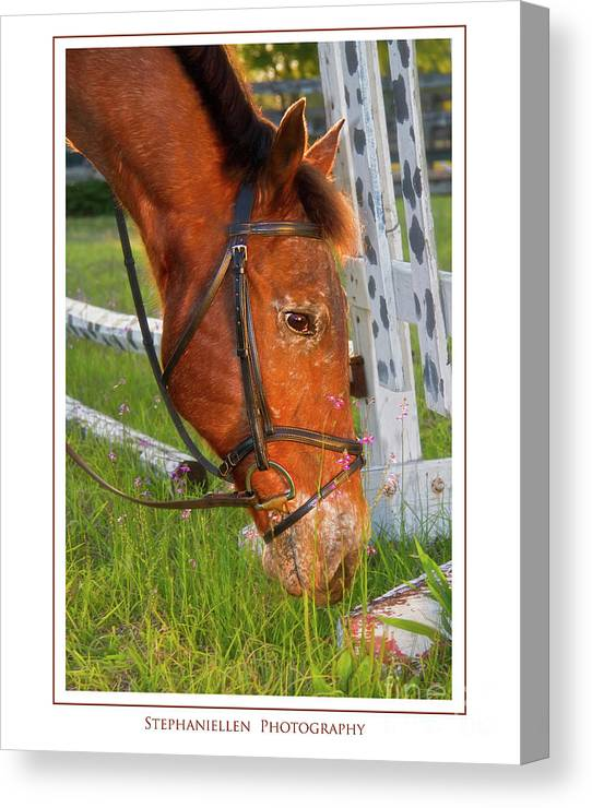 Horse Canvas Print featuring the photograph Grass And Flowers by Stephanie Hayes