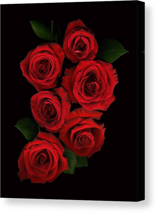 Romance Canvas Print featuring the photograph Roses Of Love by Deborah J Humphries