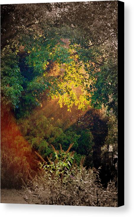 Nature Canvas Print featuring the photograph Angels Door by Trudi Southerland
