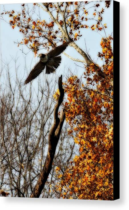 Flight Canvas Print featuring the photograph Autumn Flight by Alan Skonieczny