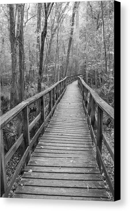 Canvas Print featuring the photograph Congaree Bw1 by Derek Thornton