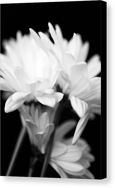 Floral Canvas Print featuring the photograph Daises In Black And White by Ayesha Lakes