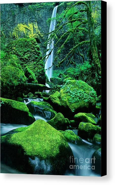 Dave Welling Canvas Print featuring the photograph Elowah Falls 4 Columbia River Gorge National Scenic Area Oregon by Dave Welling
