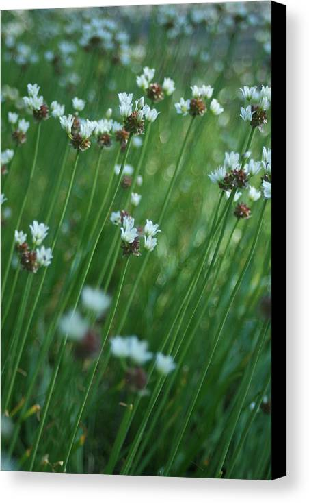 Flowers Canvas Print featuring the photograph Field Of Tiny Flowers by Christopher Larimore