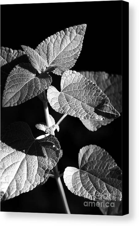 Light Canvas Print featuring the photograph Light And Shadow by Jeannie Burleson