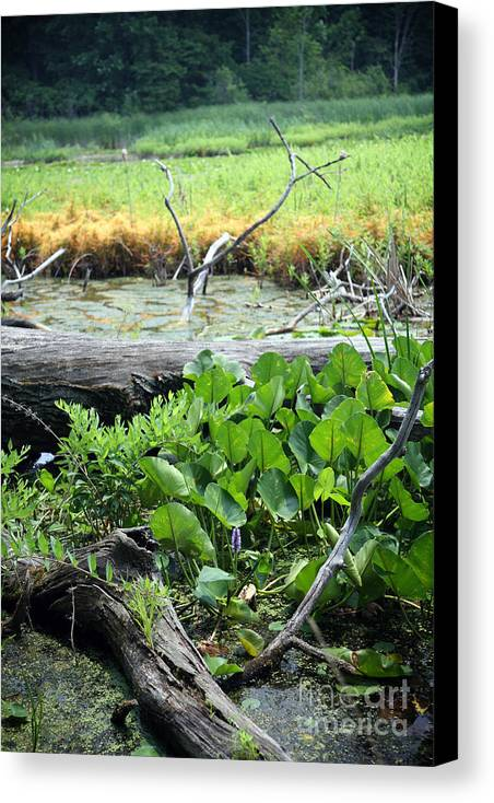 Marsh Canvas Print featuring the photograph Marsh by Jeannie Burleson