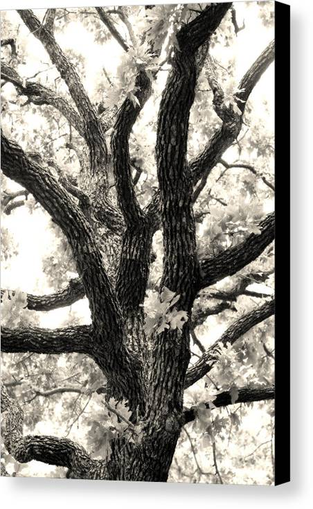 Post Canvas Print featuring the photograph Post Oak by Jeannie Burleson