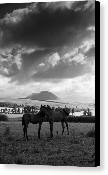 Horses Canvas Print featuring the photograph Ptichka by Artur Baboev