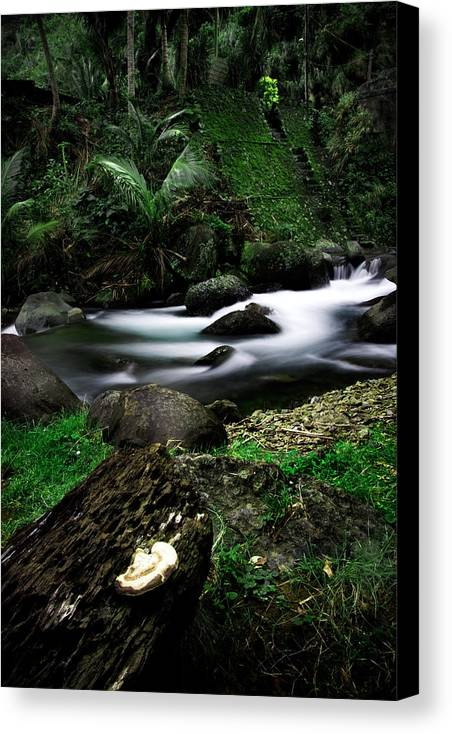 Forest Canvas Print featuring the photograph Strom by Leonard Pe