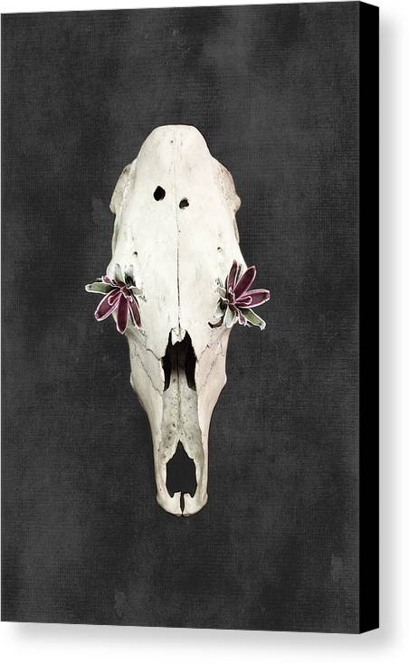 Flowers Canvas Print featuring the photograph Succulent Flowers And Horse Skull by Di Kerpan