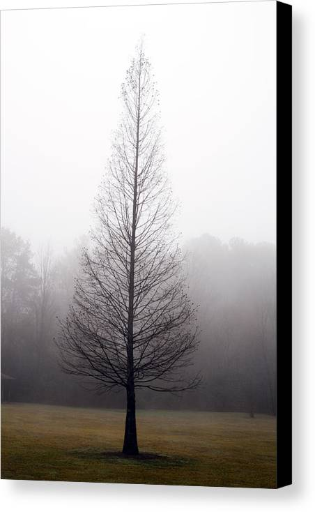 Scenic Canvas Print featuring the photograph Tree In Fog by Ayesha Lakes