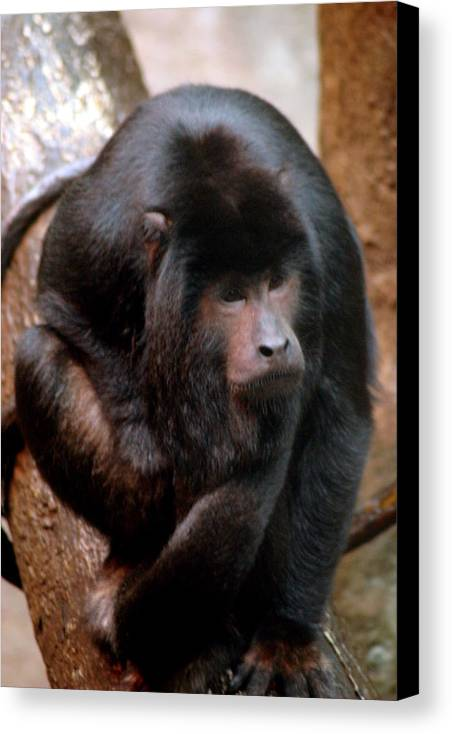 Monkey Canvas Print featuring the photograph Who Me by ShadowWalker RavenEyes Dibler