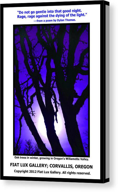 Oak Trees Canvas Print featuring the photograph Do Not Go Gentle by Michael Moore