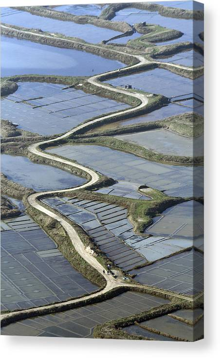 Europe Canvas Print featuring the photograph Road In Saltmarshes, Guérande by Laurent Salomon