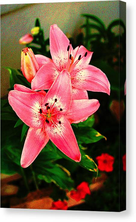 Digital Canvas Print featuring the photograph Flowering Plant by Michael C Crane