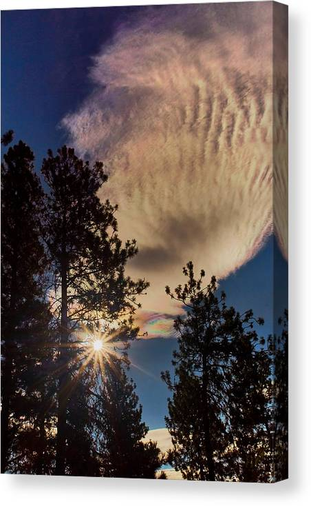 Sunrise Canvas Print featuring the photograph Appreciating Life 2 by Loni Collins