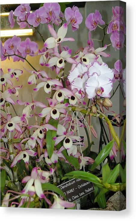 Flowers Canvas Print featuring the photograph Orchid Delight by Veron Miller