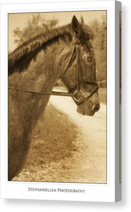 Horse Canvas Print featuring the photograph Profile by Stephanie Hayes