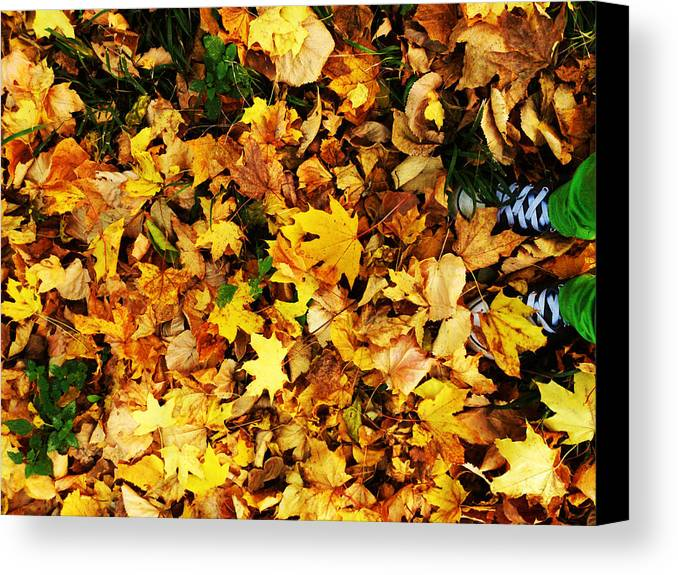 Nature Canvas Print featuring the photograph Harmony by Lucy D