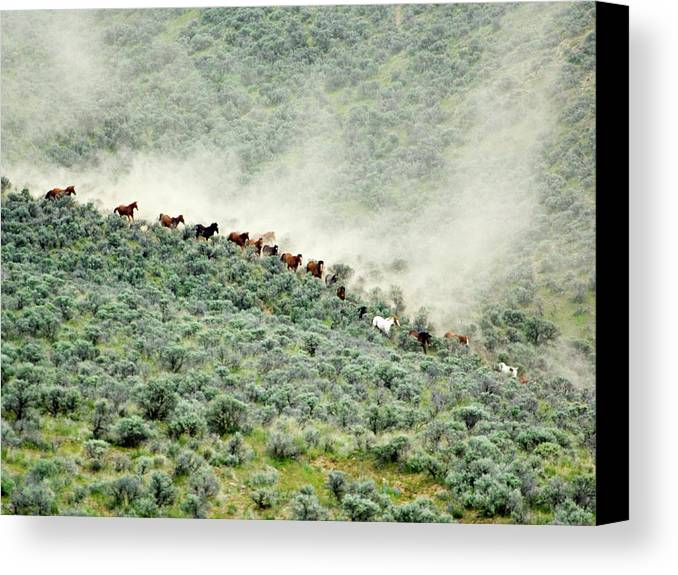 Action Canvas Print featuring the photograph Usa, Washington, Malaga, Running Horses by Jaynes Gallery