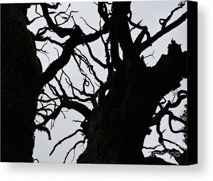 Tree Canvas Print featuring the photograph Yggdrasil by Brandi Moore