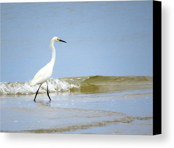 Snowy Egret Canvas Print featuring the photograph A Day At The Beach by Phyllis Beiser