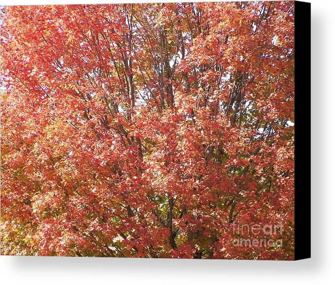 Autumn Blaze Canvas Print featuring the photograph Autumn Blaze by Kevin Croitz