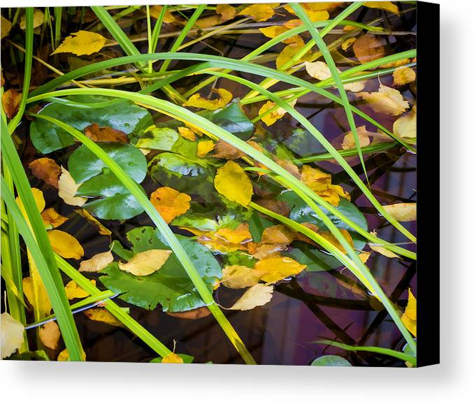Autumn Canvas Print featuring the photograph Autumn Leaves In Pond by Dean Ginther