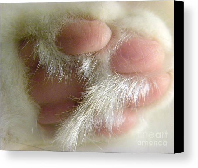 Paw Canvas Print featuring the photograph Awwwww Paw by Laura Yamada