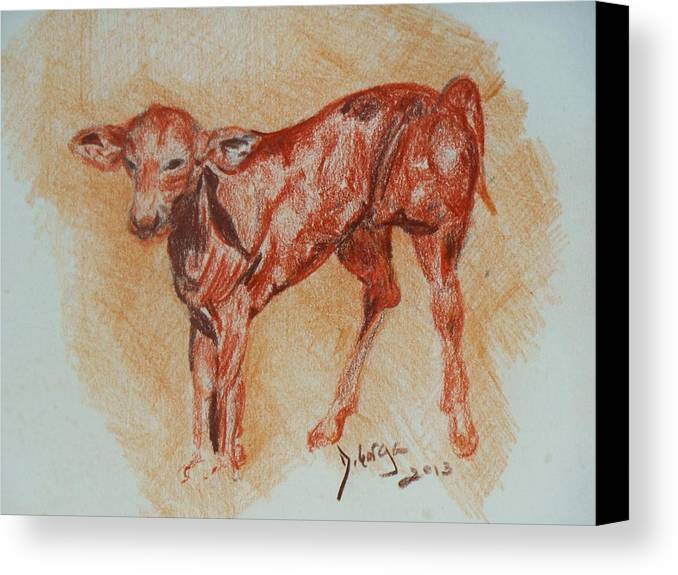 Baby Animals Canvas Print featuring the drawing Baby Calf by Deborah Gorga