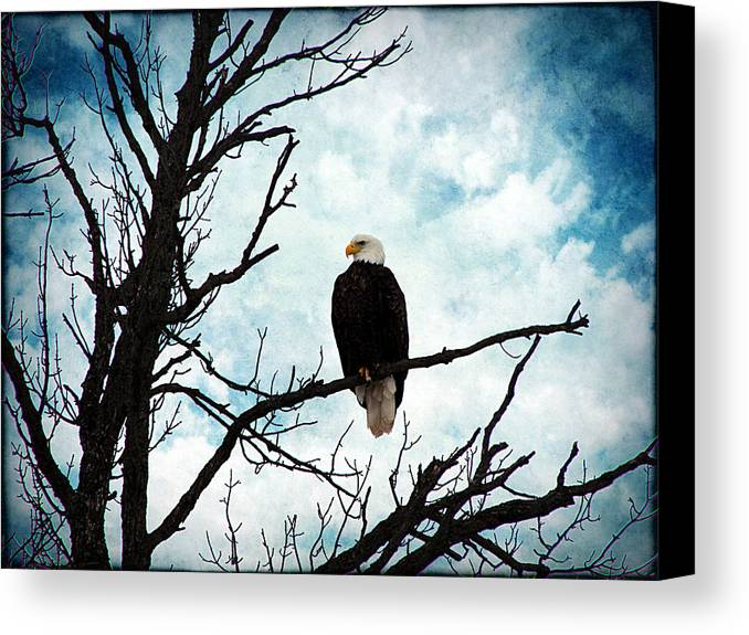 Bald Eagle Canvas Print featuring the photograph Bald Eagle by Cassie Peters