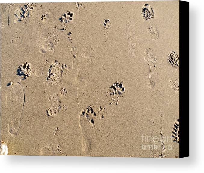 Beach Canvas Print featuring the photograph Beach Doggies by Jillyin Calhoun
