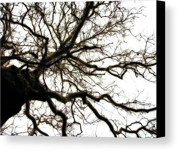 Branches Canvas Print featuring the photograph Branches by Michelle Calkins