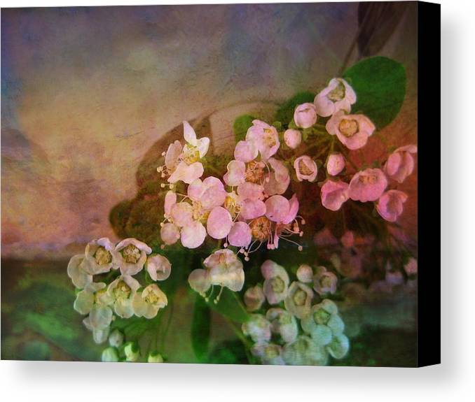 Spirea Canvas Print featuring the photograph Bridal Memories by Shirley Sirois