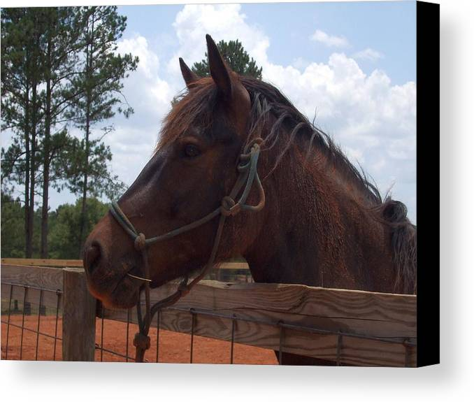 Horse Canvas Print featuring the photograph Brown Horse by Lisa Wormell