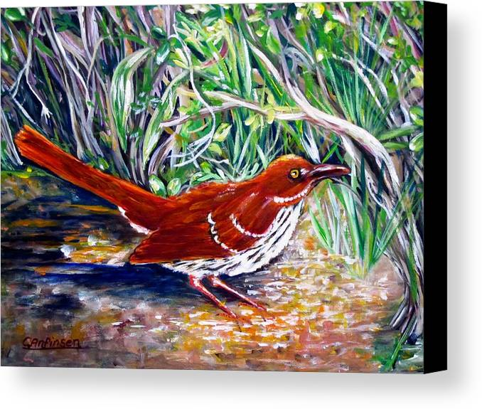 Brown Thrasher Canvas Print featuring the painting Brown Thrasher In Sunlight by Carol Allen Anfinsen