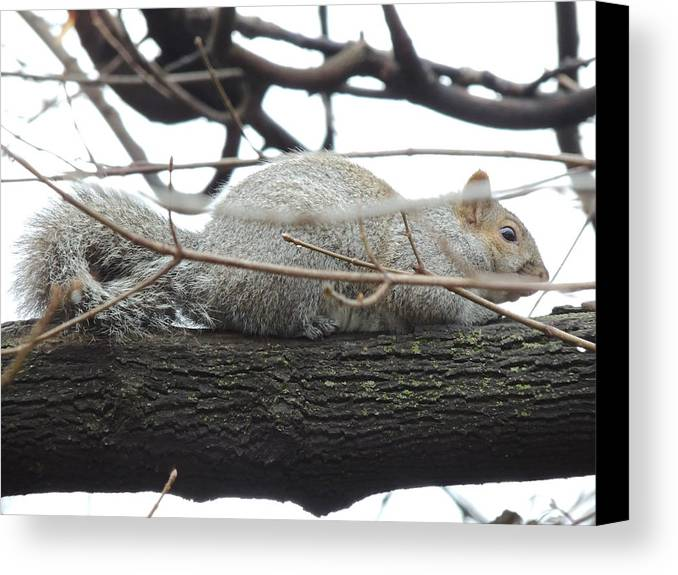 Bushy Tail Canvas Print featuring the photograph Bushy Tail by Todd Sherlock