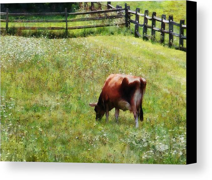 Cow Canvas Print featuring the photograph Cow Grazing In Pasture by Susan Savad