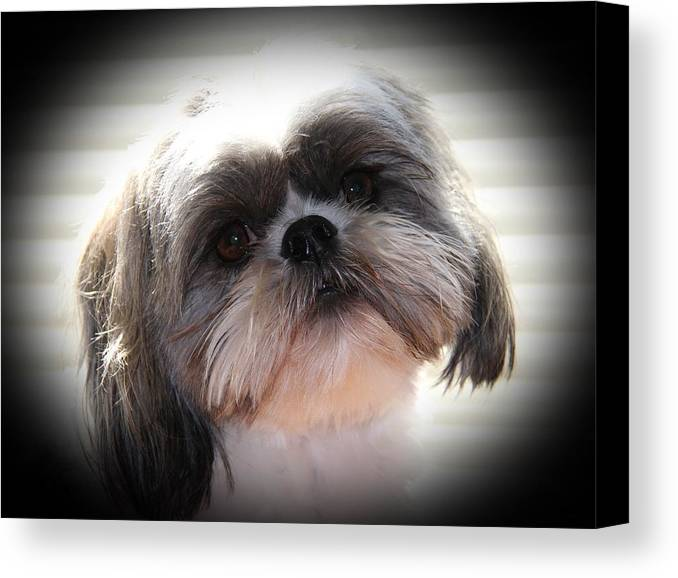 Cosmo Canvas Print featuring the photograph Cute Cosmo by Michael Williams