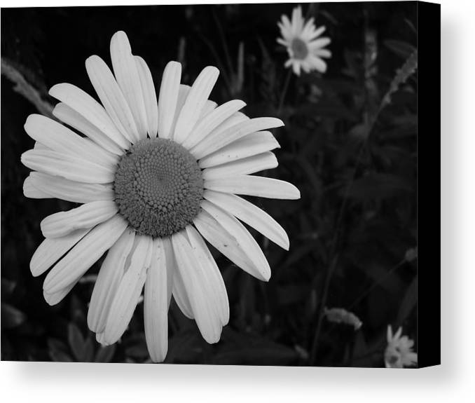 Daisy Canvas Print featuring the photograph Daisy At Night by Image-in Photoart