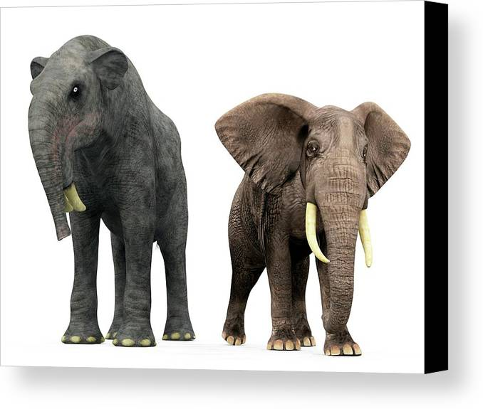 African Elephant Canvas Print featuring the photograph Deinotherium And Elephant Compared by Walter Myers