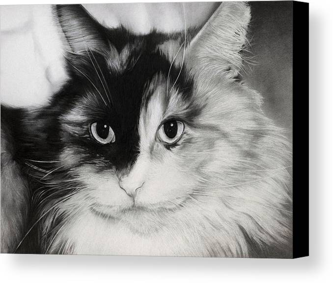 Cat Canvas Print featuring the drawing Domestic Cat by Natasha Denger