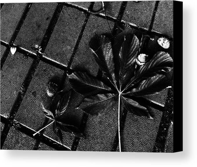 Leaves Canvas Print featuring the photograph Every Beginning Has An Ending... by Lucy D