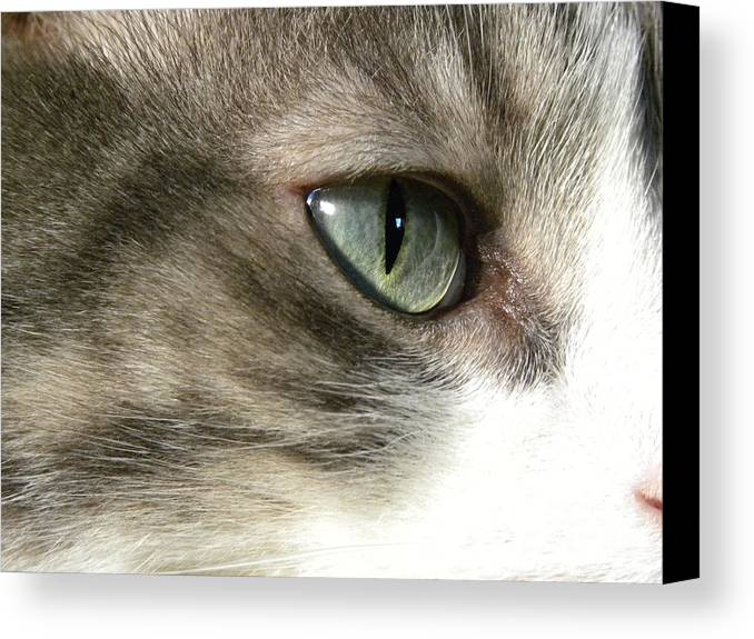 Cat Eye Canvas Print featuring the photograph Eyes 4 by Laura Yamada