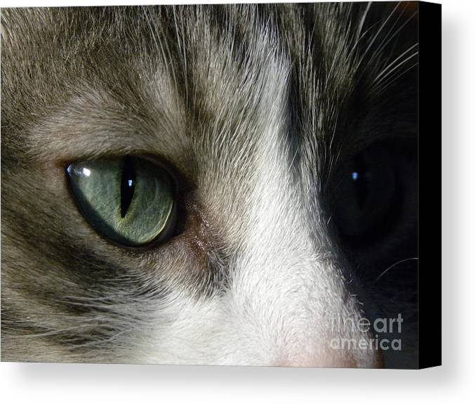 Cat Eye Canvas Print featuring the photograph Eyes 5 by Laura Yamada