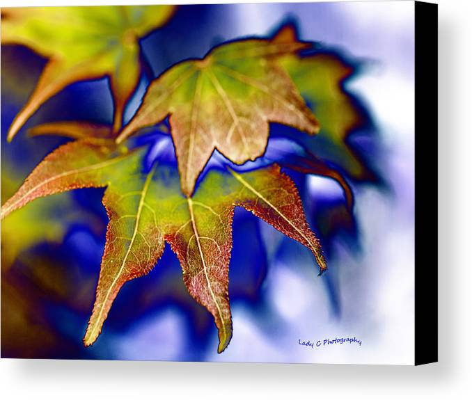 Fall Colors Canvas Print featuring the photograph Fall Colors by Maureen Cunningham